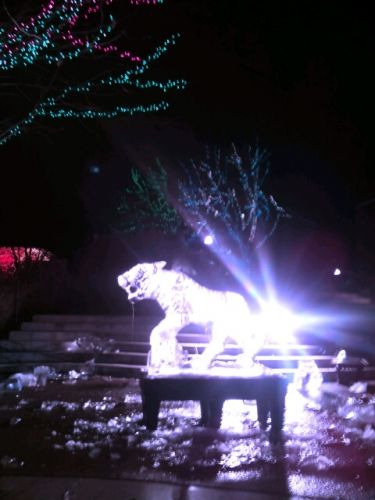 """Chique"" Event: Zoo Lights"